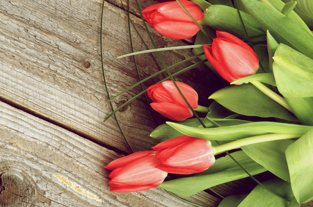 Border of Five Spring Red Tulips with Green Grass isolated on Rustic Wooden background photo