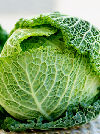 leafy: Green Leafy Texture Head of Savoy Cabbage closeup on Blurred background Stock Photo