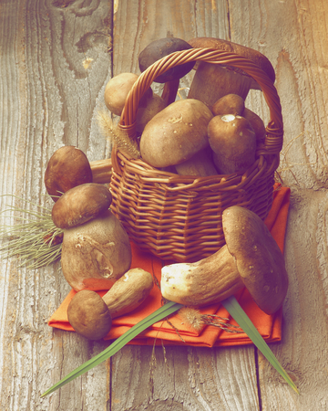retro styled: Fresh Raw Boletus Mushrooms with Stems and Grass in Wicker Basket on Orange Napkin closeup on Rustic Wooden background. Retro Styled Stock Photo