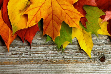 autumn leafs: Border of Variegated Autumn Leafs isolated on Rustic Wooden background