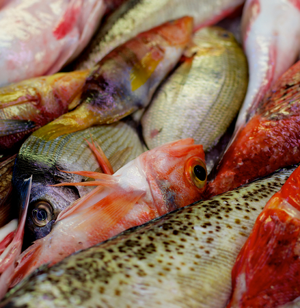 raw fish: Background of Various Raw Fish with Red Mullets, Sea Bream, Trout and Dorada on Market Place. Focus on Fish Eyes