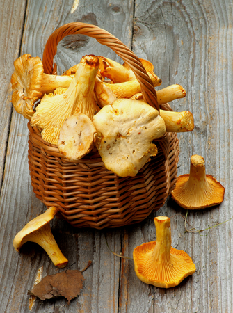 dry leaf: Big Raw Chanterelles in Wicker Basket with Dry Leaf closeup on Rustic Wooden background
