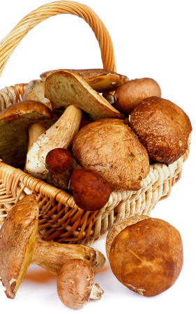 cepe: Fresh Raw Ripe Porcini Mushrooms, Orange-Cap Boletus and Peppery Bolete in Wicker Basket closeup on white background