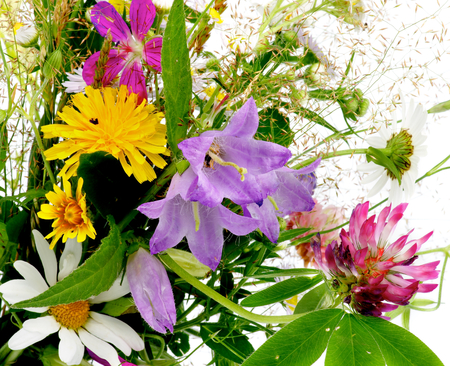 brightly colored: Bouquet of Wildflowers and Various Grasses closeup as Background