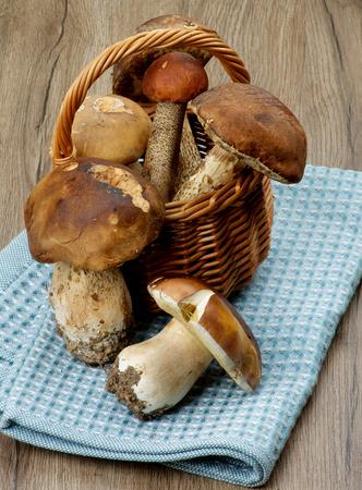 peppery: Fresh Ripe Porcini Mushrooms, Orange-Cap Boletus and Peppery Bolete in Wicker Basket closeup on Textured Wooden background