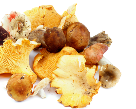 cepe: Arrangement of Raw Forest Edible Mushrooms with Golden Chanterelles, Porcini Mushrooms, Boletus and Russules closeup on white background