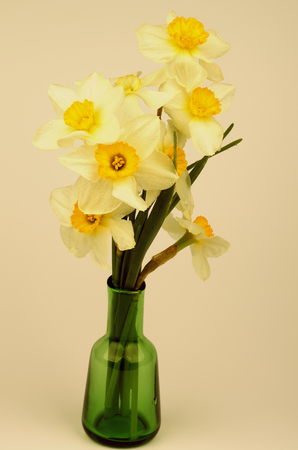 retro styled: Bunch of Fragile Spring Yellow and White Daffodils in Green Vase closeup. Retro Styled