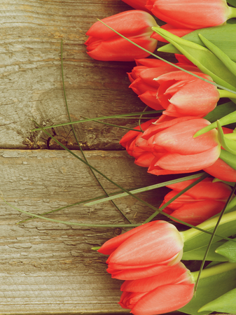 tulips in green grass: Frame of Spring Tulips with Green Grass closeup on Rustic Wooden background. Retro Styled Stock Photo