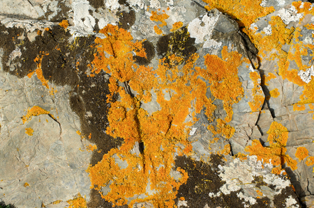 fungal: Background of Textured Grey Granite with Brown and Orange Fungal Mold closeup Outdoors Stock Photo