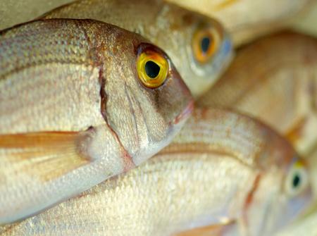 prepared shellfish: Background of Perfect Raw Sea Bream closeup on Fish Market Table. Focus on Fish Eye