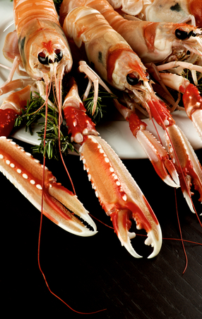 prepared shellfish: Delicious Raw Langoustines with Rosemary on White Plate Cross Section on Dark Wooden background