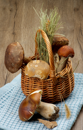 peppery: Arrangement of Raw Porcini Mushrooms, Orange-Cap Boletus and Peppery Bolete with Natural Dirties in Wicker Basket on Blue Napkin closeup on Wooden background
