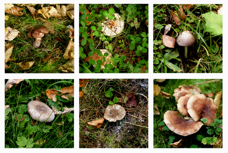 conditionally: Collection of Various Forest Non-Edible and Conditionally Edible Mushrooms between Green Grass and Dry Leafs Outdoors. Selective Focus