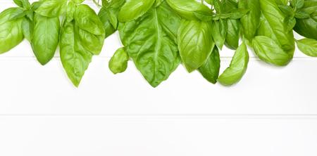 lush foliage: Frame of Fresh Green Lush Foliage Basil Leafs closeup on White Plank background Stock Photo