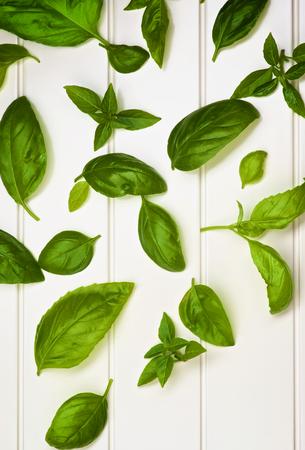 lush foliage: Background of Various Fresh Green Lush Foliage Basil Leafs closeup on White Plank background Stock Photo