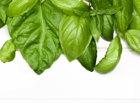 lush foliage: Horizontal Frame of Fresh Green Lush Foliage Basil Leafs closeup on White Plank background