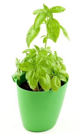 leafy vegetable imágenes de archivo, vectores, leafy vegetable
