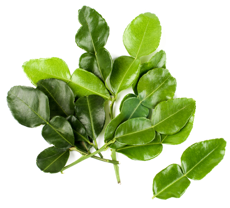 Arrangement of Fresh Crunchy Kaffir Lime Leafs isolated on White background