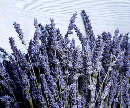 Border of Perfect Lavender Flowers closeup on Blue Wooden background Standard-Bild - 124962693