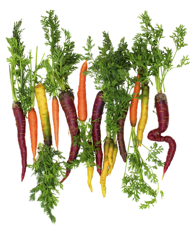 Arrangement of Fresh Ripe Orange, Yellow and Purple Carrots with Green Stems isolated on White background Standard-Bild - 124962731