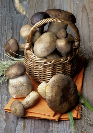 Various Fresh Raw Boletus Mushrooms with Dry Stems and Grass in Wicker Basket on Orange Napkin and Rustic Wooden background