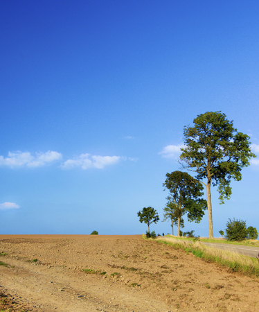 Belgium Rustic Landscape with Clay Field, Country Road and Trees against Blue Sky Outdoors Standard-Bild - 124963179