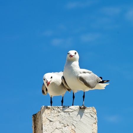 Two Curious Seagulls near Each Other Sitting on Edge of Berth isolated against Blue Sky Outdoors Banco de Imagens