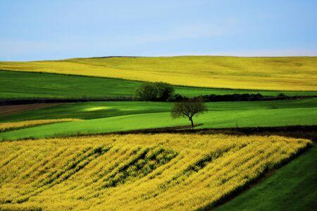 Blue Sky Horizon in Sunny Day Outdoors Standard-Bild - 124963597
