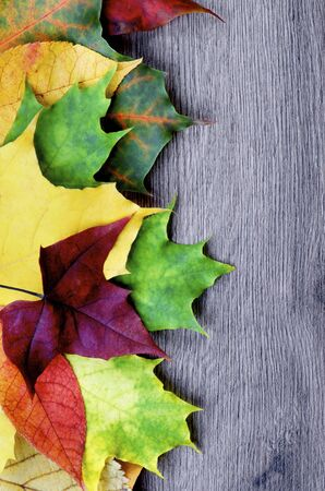 Border of Various Colorful Autumn Birch, Maple, Aspen and Alder Leafs closeup on Wooden background. Top View Standard-Bild - 124963865