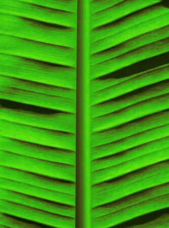 Fresh Green Palm Tree Background closeup Outdoors Imagens