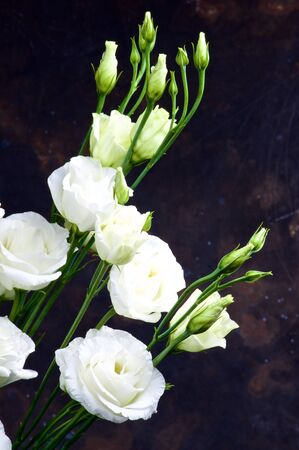 Elegant Flowers Bouquet with White Lisianthus and Decorative Green Stems closeup on Dark Grunge background