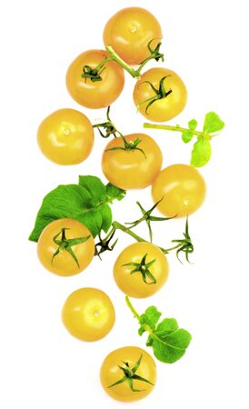 Fresh Ripe Yellow Tomatoes with Twigs and Leafs isolated on White background. Top View
