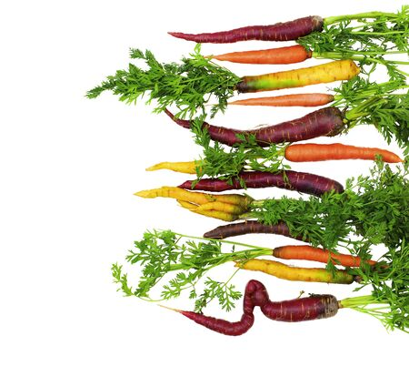 Fresh Ripe Orange, Yellow and Purple Carrots with Green Stems In a Row isolated on White background