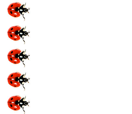 Collection of Live Lady Bird In A Row isolated on White background