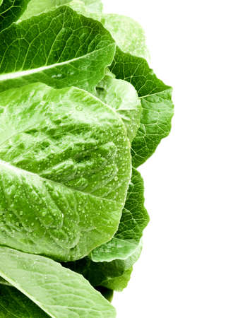 Frame of Fresh Romaine Lettuce Leafs (Lactuca sativa) isolated on White background