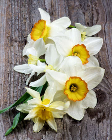 Arrangement of Seven Spring White and Yellow Daffodils with Red Core and Green Leafs In a Row on Rustic Wooden background