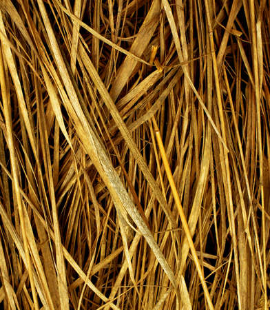 Background of Yellow Crackly Dry Straw closeup