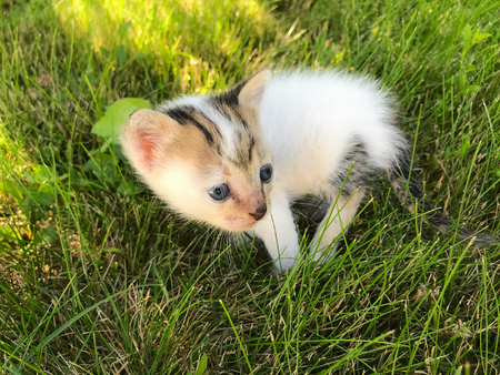 Small newborn kitten with blue eyes on a green grass