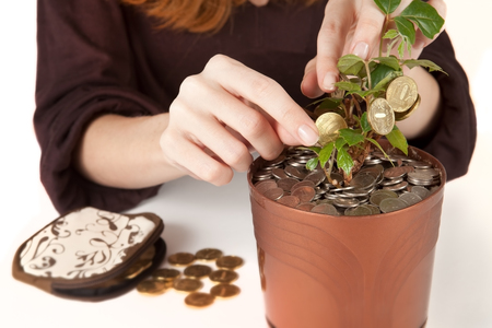 Woman is harvesting coins from money tree. Investment, profit, revenue concept. Close up Stock Photo