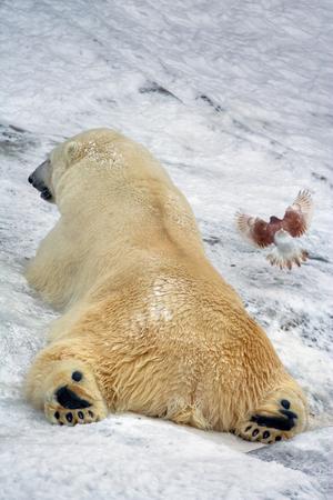 A polar white bear and a bird