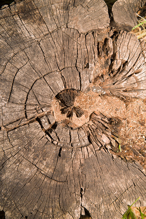 crevice: A cross section of the trunk of an old tree