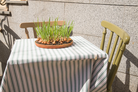 platen: Onion growing ceramic plates located on a restaurant table. Stock Photo