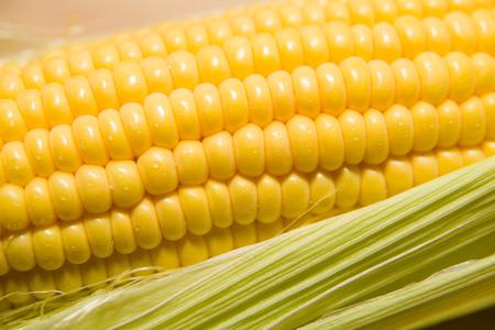 emporium: One ear of corn ripe old cloth