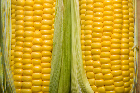 emporium: A few mature ears of corn on the old cloth