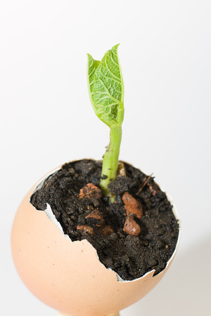 potherb: Green plant growing from a pile of soil on a white background Stock Photo