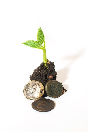 chit: Green plant growing from a pile of soil and coins on a white background Stock Photo