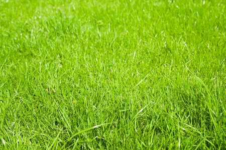 lawn grass: Green grass growing from a spring lawn. Background. Stock Photo