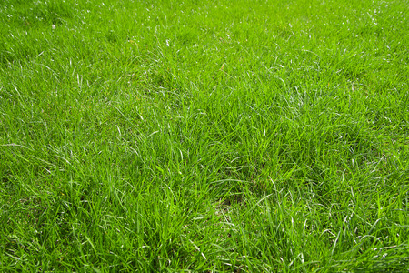springtide: Green grass growing from a spring lawn. Background. Stock Photo