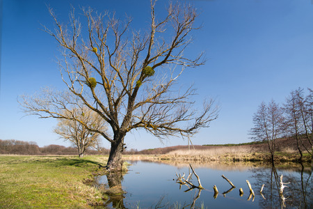 brink: Old tree on the bank of the river  against the blue sky