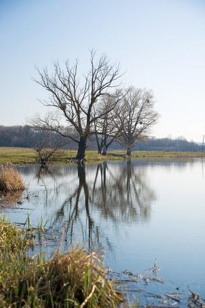 springtide: Old trees on the bank of the river  against the blue sky